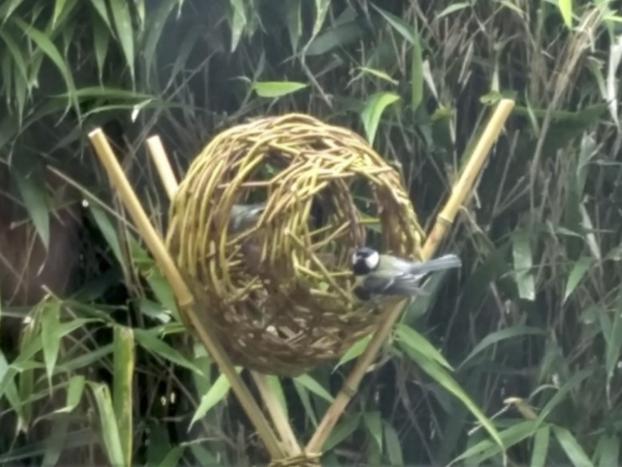 Workshop: wilgentenen voederbol voor kleine vogels maken